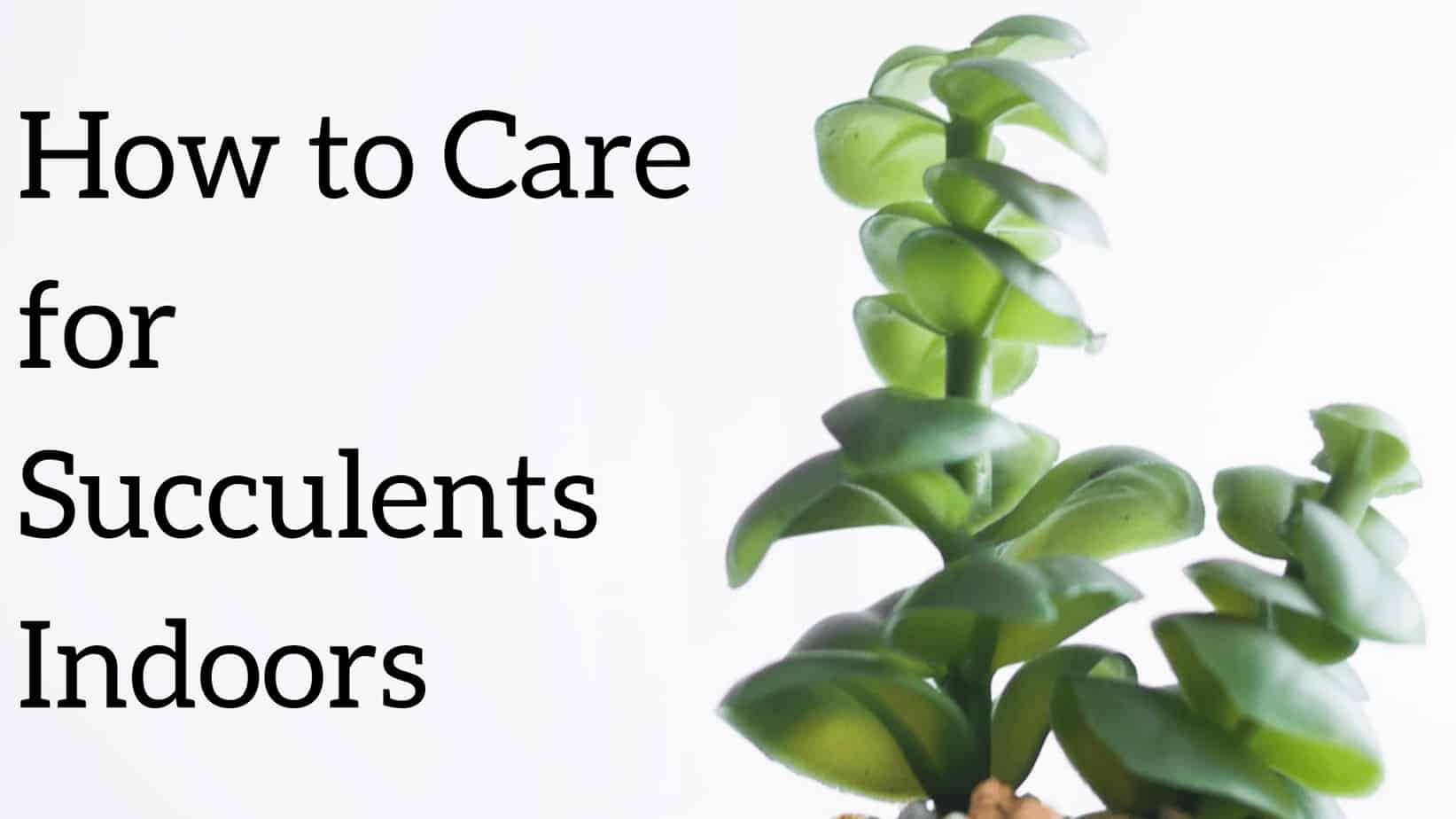 How To Care For Succulents Indoors Good